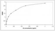 NBP1-95644 - Somatostatin / SST