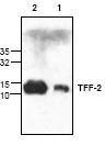 NBP1-45886 - Trefoil factor 2 / SML1