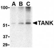 NBP1-76716 - TANK / ITRAF