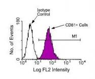 NBP1-28137 - CD81 / TAPA1