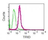 NBP1-96038 - TBP (TATA-box-binding protein)