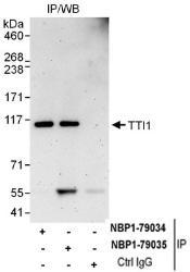 NBP1-79035 - TTI1