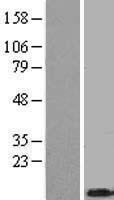 NBL1-17128 - Thymosin beta 4 Lysate