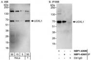 NBP1-42680 - UCKL1