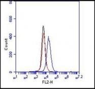 NBP1-58370 - CD144 / Cadherin-5