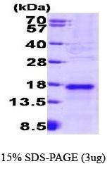 NBP1-30236 - VEGF-A