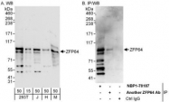 NBP1-78187 - ZFP64 (isoforms 1 and 2)