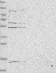 NBP1-86822 - ZNF232