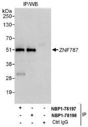 NBP1-78198 - ZNF787