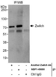 NBP1-49690 - ZWILCH