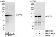 NBP1-71808 - MPHOSPH8