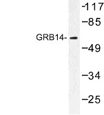 NBP1-00863 - GRB14