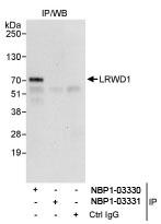NBP1-03330 - LRWD1