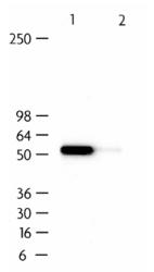 NB120-11980 - IRF7