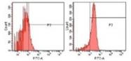 NB100-1992 - Superoxide dismutase 2 / SOD2