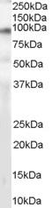 NB100-860 - CD318 / CDCP1