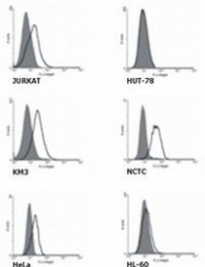 NB500-345 - TNFRSF21 / Death receptor 6 (DR6)