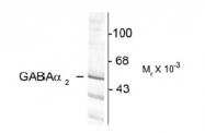 NB300-149 - GABRA2