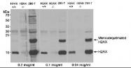 NB100-930 - Histone H2A.x
