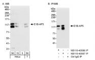 NB110-40587 - HNRNPUL1 / E1BAP5