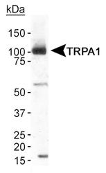 NB110-40763 - TRPA1