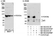NB100-613 - FOXO3 / FKHRL1