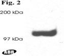 NB300-546 - DLG2 / PSD93