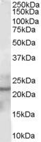 NB100-1888 - Glutathione peroxidase 2 / GPX2