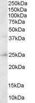 NB300-887 - HSD17B10 / ERAB