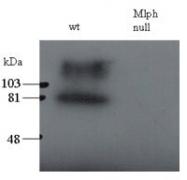 NB300-943 - Melanophilin