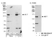 NB100-2234 - EIF4ENIF1 / 4E-T