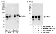 NB100-2352 - CRTC1 / MECT1