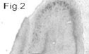 NB100-2063 - SAP102 / Dlg3
