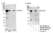 NB100-2859 - TP53BP2