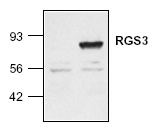 NB120-2564 - RGS3