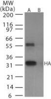 NB100-56608 - Influenza A H5N1