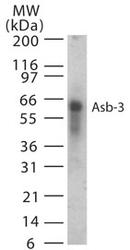 NB100-56645 - ASB3