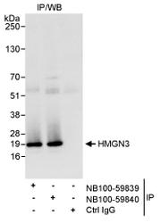 NB100-59839 - HMGN3 / TRIP7