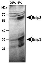 NB110-60562 - NIP3