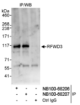 NB100-68206 - RFWD3 / RNF201