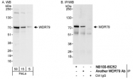 NB100-68252 - WDR79 / TCAB1