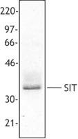 NB100-78461 - SIT1 / SIT