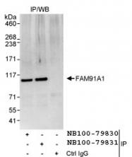 NB100-79830 - FAM91A1