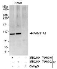 NB100-79831 - FAM91A1