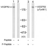 NB100-82262 - CD309 / VEGFR-2 / Flk-1