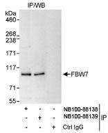 NB100-88138 - FBXW7