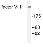 NB100-91761 - Coagulation factor VIII (F8)