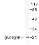 NB100-91782 - Glucagon