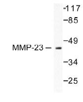 NB100-91877 - MMP-23