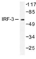 NB100-92173 - IRF3